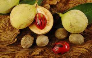 Полезные свойства и противопоказания мускатного ореха