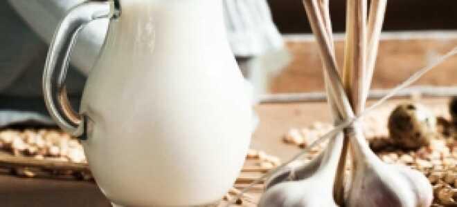 В чем целебная сила молока с чесноком