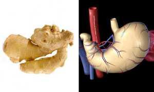 Имбирь для желудка и кишечника