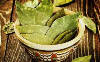Лечение кашля при бронхите лавровым листом