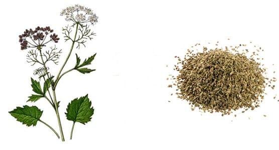 анис и семена аниса