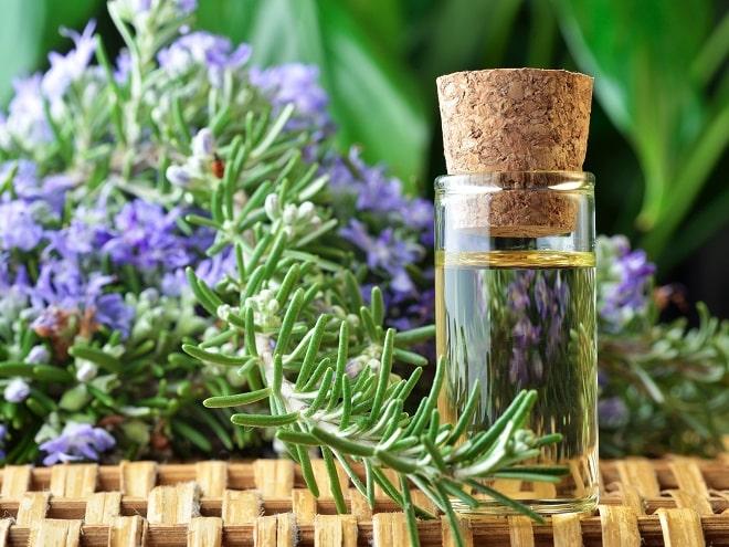Лечебные свойства и противопоказания розмарина: советы по применению пряности